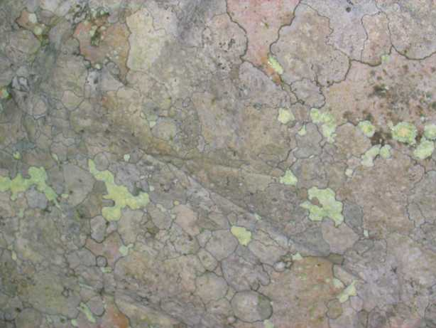 Avebury_lichen_on_stone.jpg