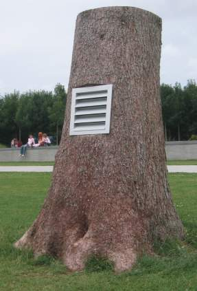 Tree with a vent. Purpose unknown.