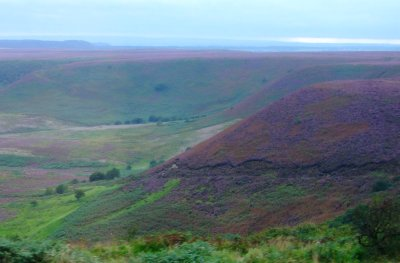 Heather turns the moors to purple