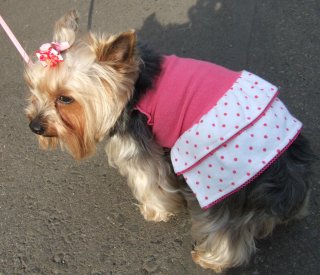 Dog in a Dress