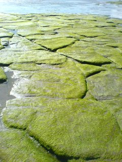 Green Pavement - Rossnowlagh Beach