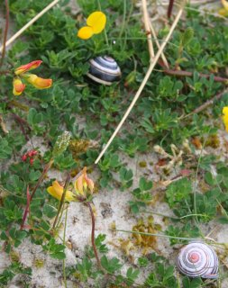 Snails and Flowers