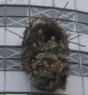 Nest Closeup
